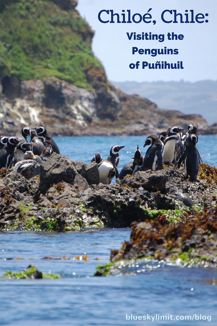 Chiloé, Chile- Visiting the Penguins of Puñihuil