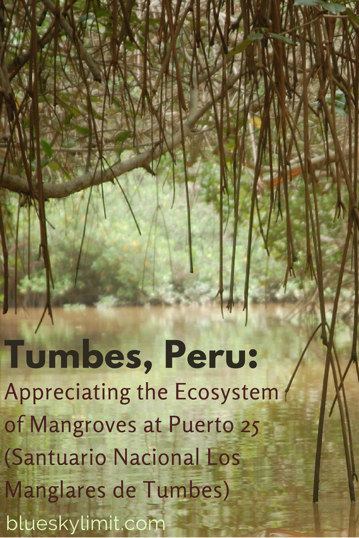 Tumbes, Peru: Appreciating the Ecosystem of Mangroves at Puerto 25 (Santuario Nacional Los Manglares de Tumbes)