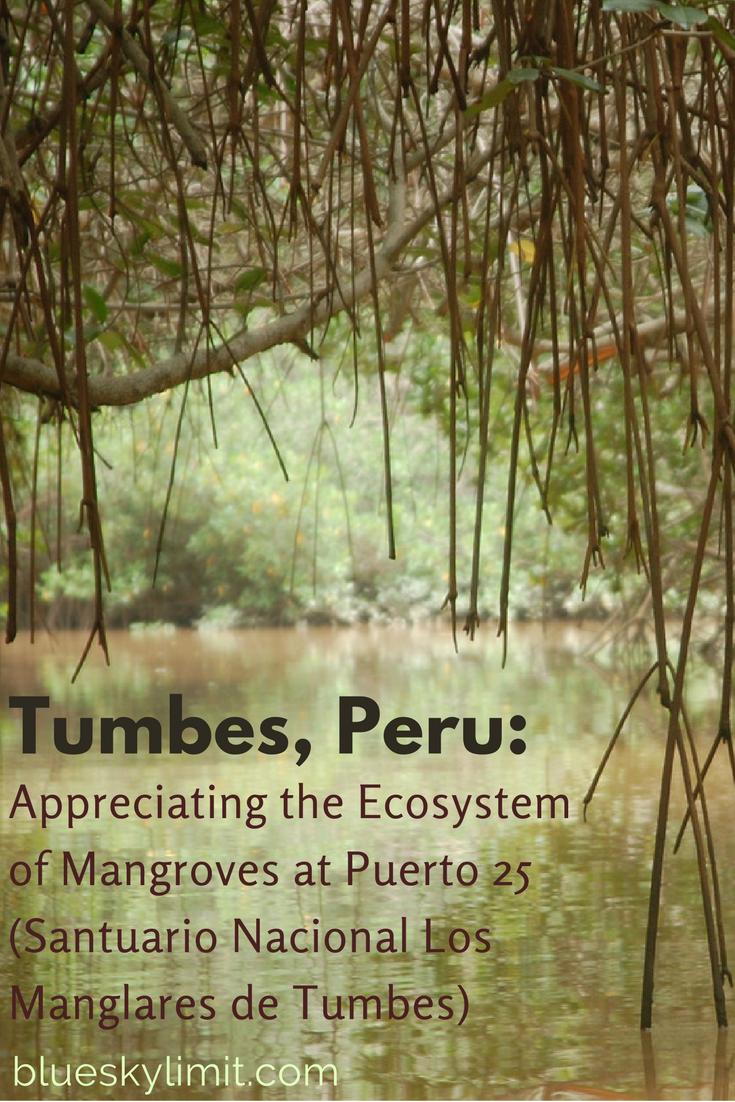 Tumbes, Peru: Appreciating the Ecosystem of Mangroves at Puerto 25 (Santuario Nacional Los Manglares de Tumbes)